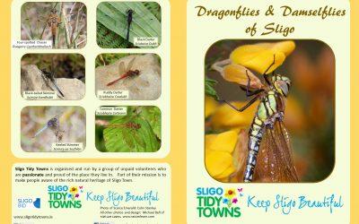 Sligo Dragonfly Survey